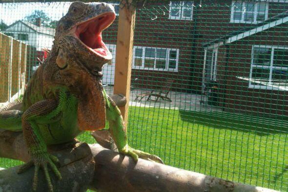 Desde el 2006, el amante de los reptiles no ha tenido una novia.