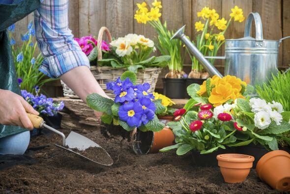 Trabajar en el jardín. Si amas tus plantas y pasas varias horas por sema...