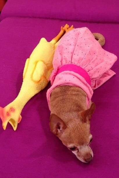 """""""Buenos días, quien fuera perro y darme esta vida, @honeyberrytv #sinver..."""