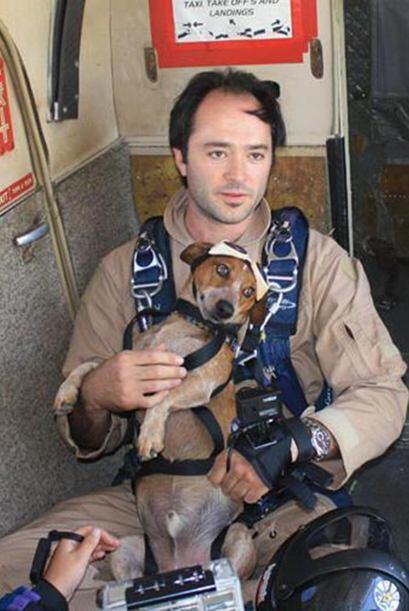 Pues de acuerdo al paracaidista Riley es un perro muy tranquilo y confía...