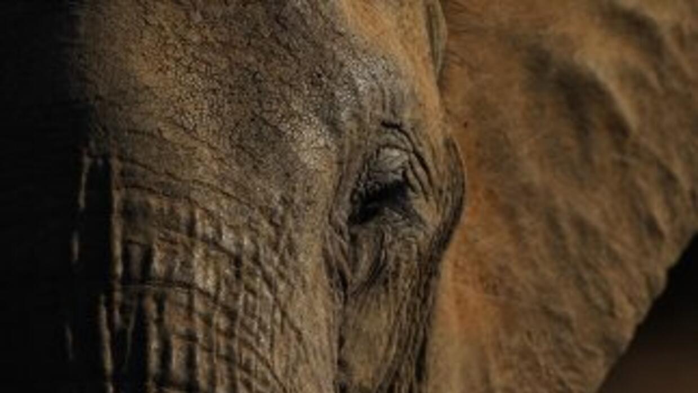 Un amigo de la víctima declaró que los elefantes eran su pasión.