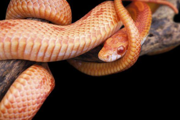 """Los animales que se arrastran, los reptiles en general desde ofidios """"se..."""