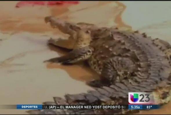 Tras las inundaciones y desbordamientos de ríos en Guerrero, México, alg...