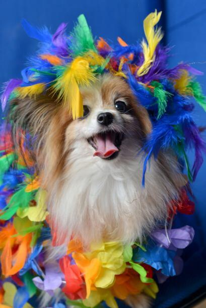 Perritos consentidos con dueños muy dedicados