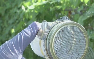 Emiten alerta en Texas tras reporte del primer caso de dengue en Dallas