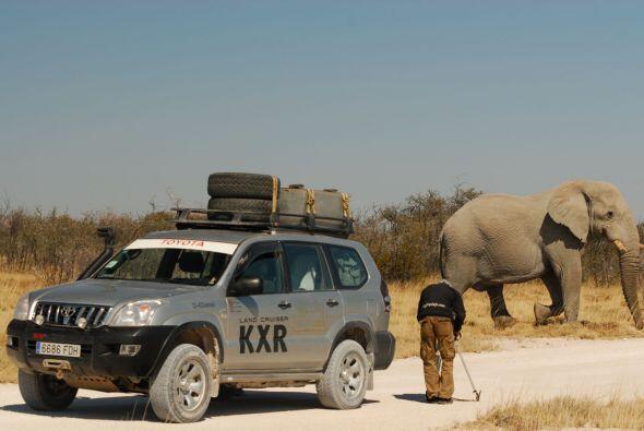 Y si eres un amante de los elefantes qué mejor que un safari por África.