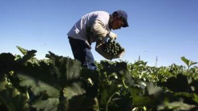 El Departamento de Agricultura de Georgia estudiará cómo establecer un p...