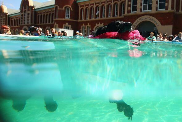 Otros participan en actividades acuáticas.