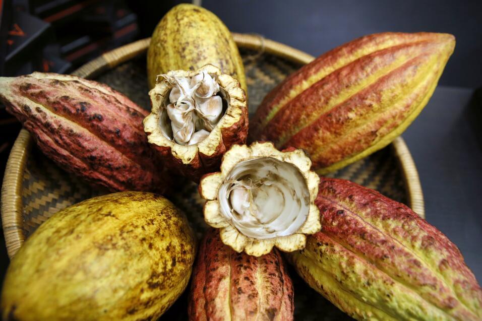 El cacao es un alimento rico en sustancias antioxidantes que benefician...