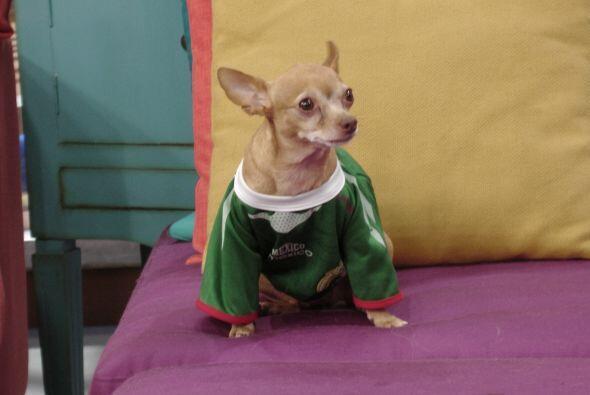Honey siempre está a la moda. ¿Qué tal luce con su camiseta verde?