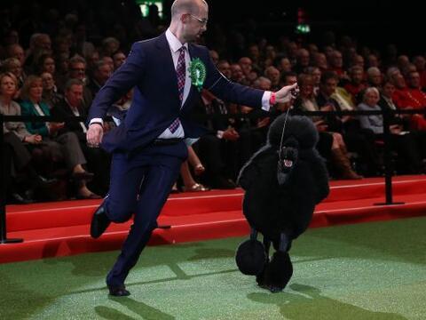 El Crufts Dog Show es concurso de habilidad más antiguo e importa...