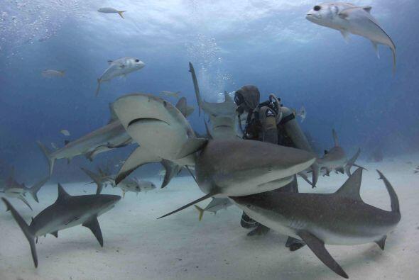 ¿Te atreverías a nadar con estos animales?