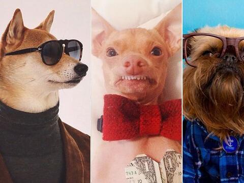 Estos perros te roban la mirada y el corazón, descubre por qu&eac...