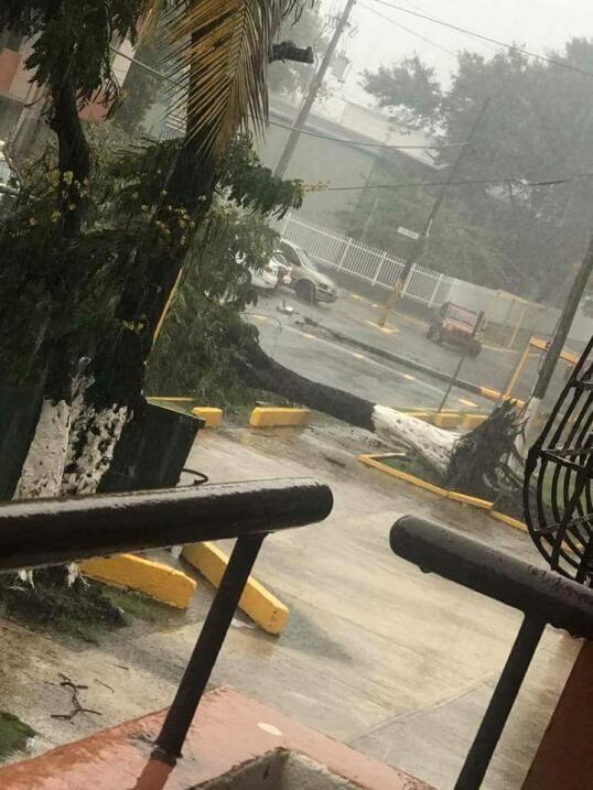Escombros y árboles caídos en San Juan.