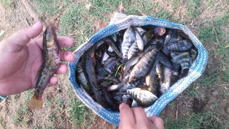 Distintas especies, entre peces, camarones y cangrejos, murieron por la...