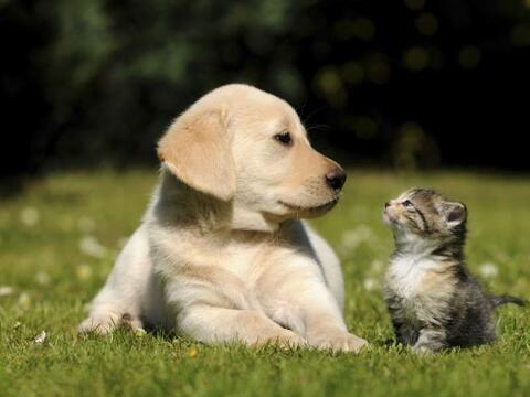 Por años se ha creado la rivalidad entre perros y gatos. Lo ciert...