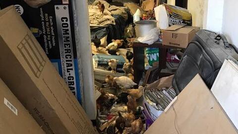 Las condiciones en las que fueron encontradas las aves en un almac&eacut...