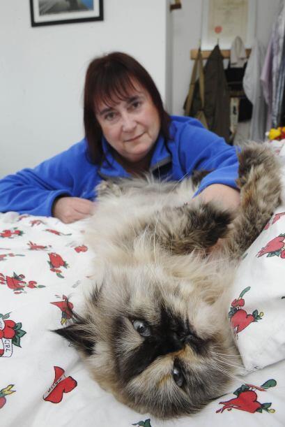 Pero esta no es ninguna exageración, esta gatita llamada Dumpty Roo vive...