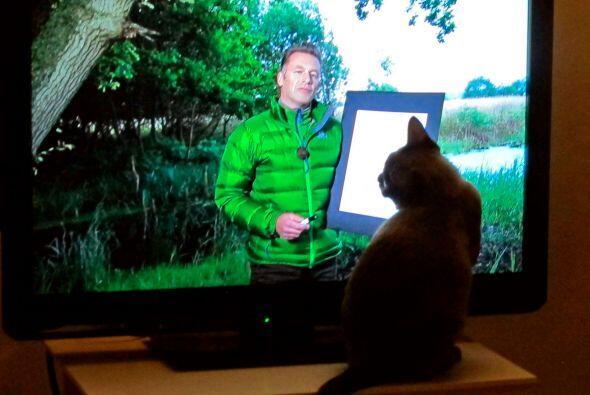 En cuanto acaba uno permanece frente al televisor para esperar el siguie...