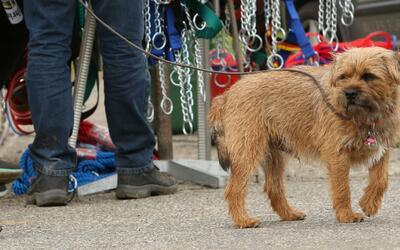 Alerta por brote de gripa que afecta a los perros en el condado de Los Á...