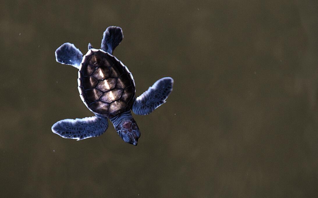 Cinco superpoderes de las tortugas que ni sospechabas GettyImages-483571...