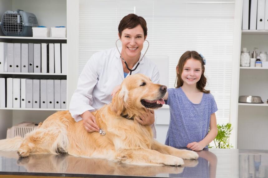 Señales para saber si tu mascota debe ir al veterinario