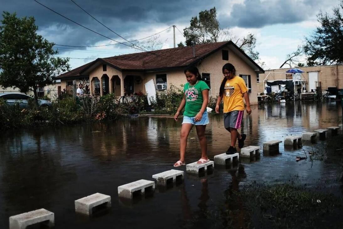 Irma immokalee