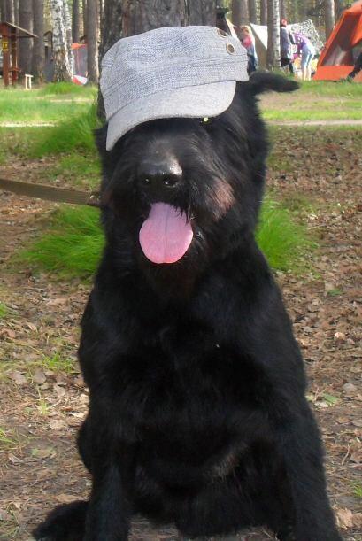 Aleksandr, un ex entrenador de perros en la milicia rusa, notó qu...
