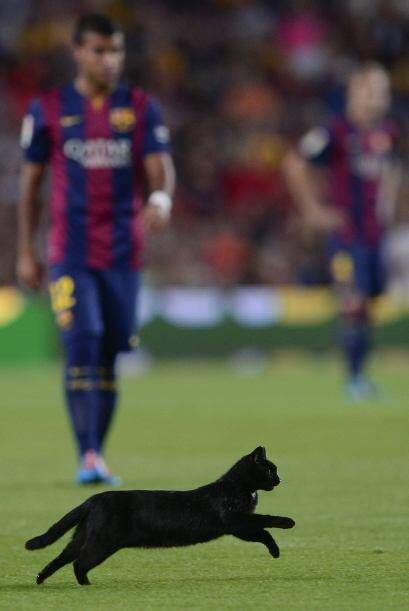 Los jugadores se veían un tanto sorprendidos por el felino, aunque nadie...