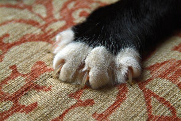 Por último, también te toparás con el hecho de que a los perros y gatos...