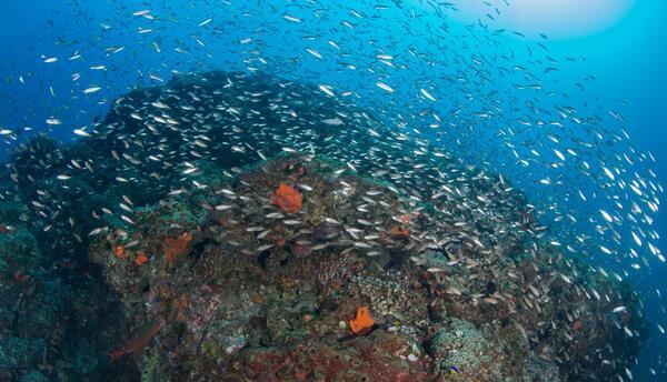 El arrecife se localiza a 150 kilómetros de las costas de Texas y Luisiana