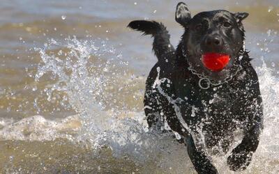 Datos, cifras y estadísticas de los perros en Estados Unidos