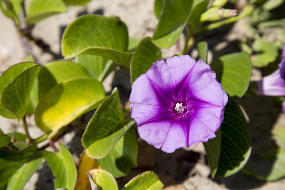 Las flores silvestres más exóticas de Texas Flores.jpg
