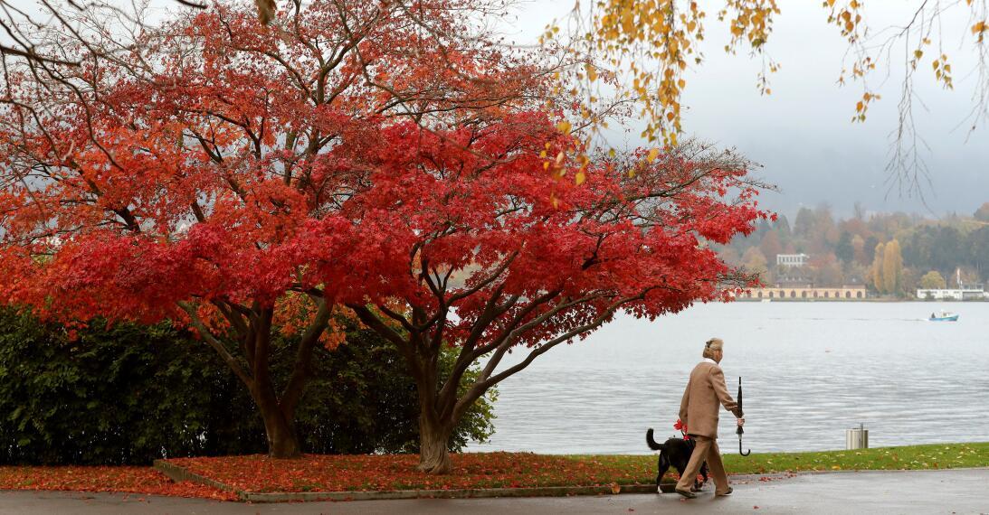 ¿Por qué las hojas cambian de color en otoño? La explicación no es tan s...