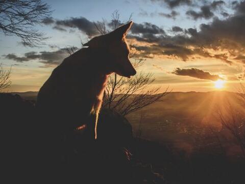 El Mes del Perro en el horóscopo chino se extiende desde el 23/24...