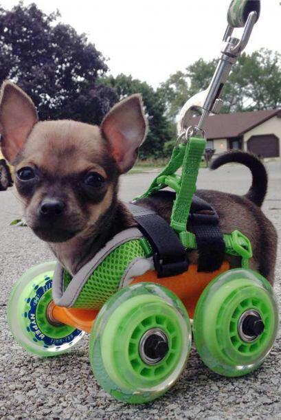 Este cachorro no sólo es una ternura, sino que también es una estrella d...