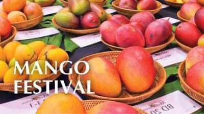 Festival Mango
