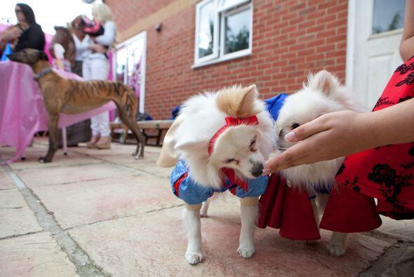 """Sus perritos también son parte de una """"elite doggy' y asisten a fiestas..."""