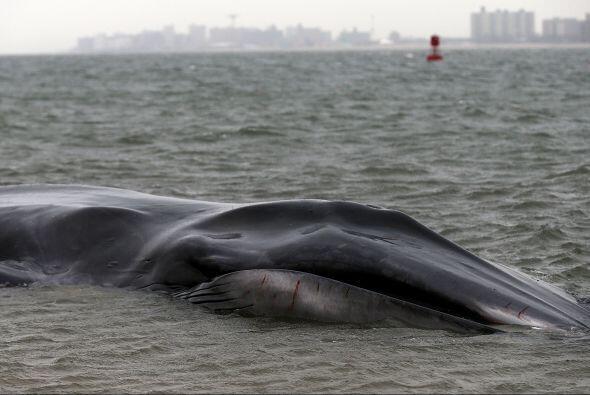 Están a la espera de la llegada de expertos en vida marina, según las mi...