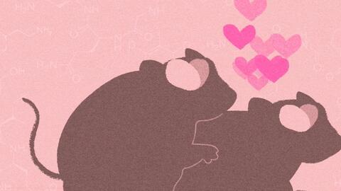Lo que los campañoles de pradera nos enseñan sobre la naturaleza del amor