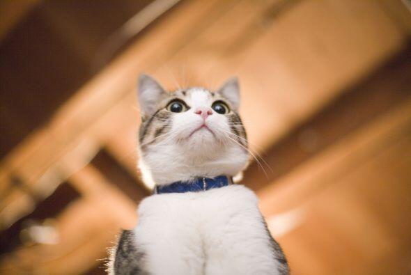 A tu gatito lo debes bañar una vez al mes, si lo tienes desde pequeño lo...