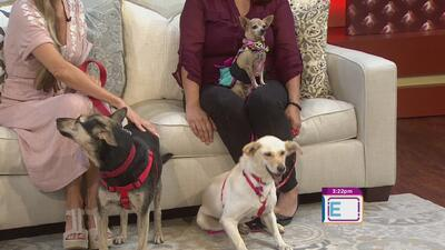 Esteriliza a tu mascota y evitemos la sobrepoblación de perros