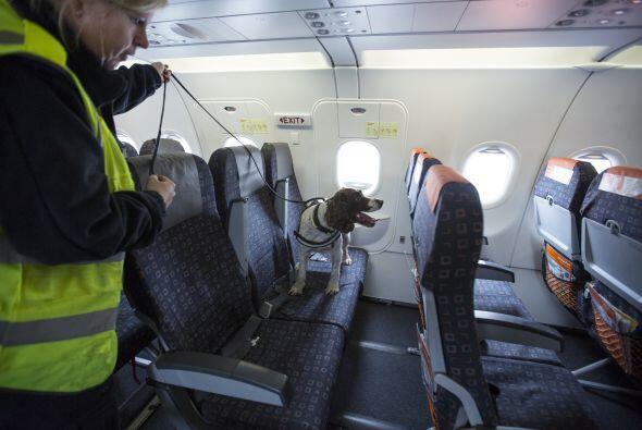 Lo ideal es que el perro sea capaz de encontrarlo con los indicios olfat...