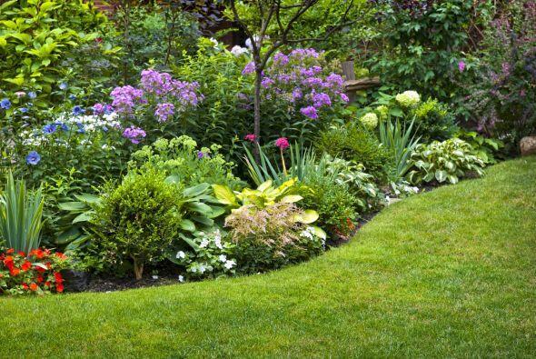 Descubre cómo lograr un jardín repleto de flores, plantas, aromas y simp...