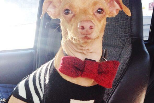 Además Tuna ahora es un embajador del rescate de animales.