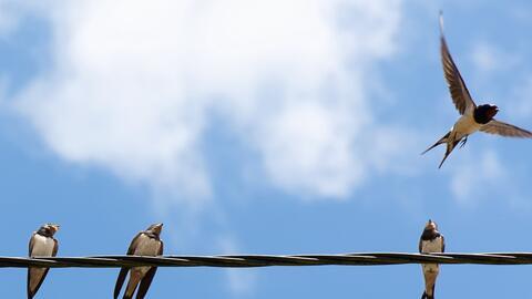La fauna urbana, como las golondrinas, no solo descansan la vista, sino...