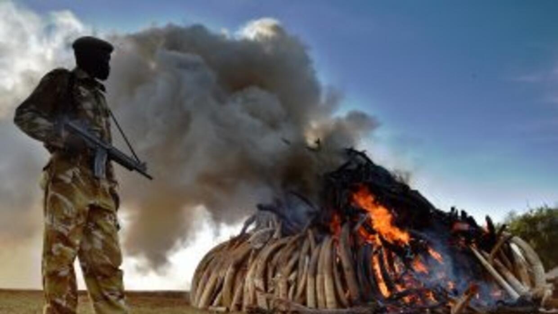 Oficial del Servicio de vida salvaje de Kenia observa mientras la pila d...