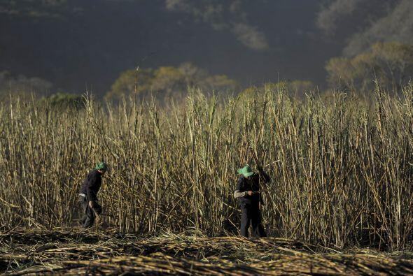 Se cuenta que la caña de azúcar llegó al país desde México, en tiempos d...