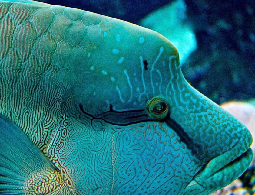 Los puntos brillantes se encuentran sobre todo en el Océano Pacífico com...