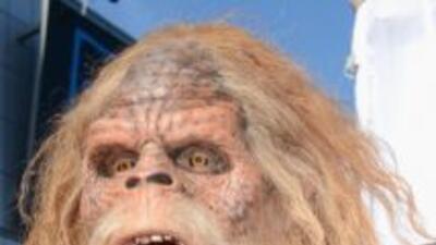 Resuelven misterio del abominable hombre de las nieves. El yeti es una b...